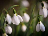 Barbatii dau 200.000 de euro pe flori, pentru a impresiona femeile de Martisor! Ce flori prefera romancele!