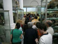 Muzeul Antipa se redeschide la sfarsitul lunii iunie