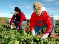 Angajatorii olandezi vor muncitori romani. Autoritatile spun NU! VIDEO