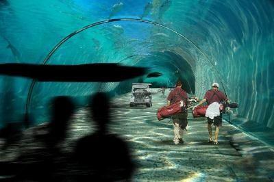 Statiunea subacvatica de jumatate de miliard de dolari. Va fi cea mai scumpa din lume. GALERIE FOTO