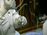 Bacteria E.coli ar putea fi controlata ca un robot