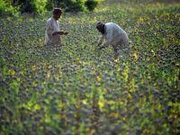 Banca Mondiala vrea sa stabilizeze preturile alimentelor. Ofera fermierilor un ajutor de 4 mld. $
