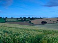 Cu cat se vinde Romania peste hotare. Preturile terenurilor, de zeci de ori mai mici ca in Vest. Italienii, nemtii si arabii, cei mai interesati sa faca agricultura la noi