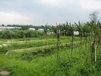 Agricultura ecologica, intre hrana viitorului si o bula speculativa. De ce renunta producatorii la culturile eco si cum se explica diferentele de preturi