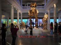 Incasari de aproape 300.000 de euro pentru Muzeul Antipa in weekendul redeschiderii. Afla in ce zi a lunii accesul este gratuit