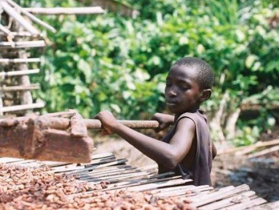 Pretul uman al ciocolatei. Cati copii sunt exploatati pe plantatiile de cacao
