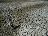 Emil Boc: Romania poate inregistra pierderi agricole daca seceta nu dispare luna viitoare