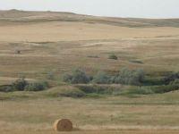 Harta secetei in Romania. Ce regiuni agricole sunt afectate FOTO