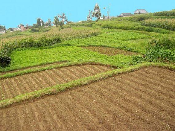 Tabara:  Impozitarea cu 16% a micilor producatori nu poate fi aplicata. Ar bloca agricultura