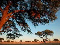 Ridicarea Africii. Cand toata lumea se scufunda, continentul negru a gasit reteta pentru crestere economica