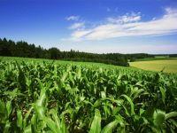 Agricultura ne-a salvat anul trecut. Romania ocupa locul 2 in UE la productia de porumb si locul 5, la grau