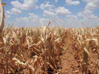 Agricultorii cer stare de urgenta si stoparea exporturilor, din cauza secetei. Rezervele de cereale, suficiente pentru maximum 2 saptamani