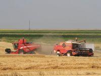 10 masuri pentru agricultura, propuse de Guvern