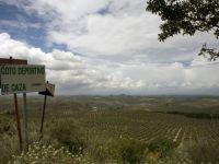 Industria care loveste din plin Spania, cel mai mare producator la nivel mondial