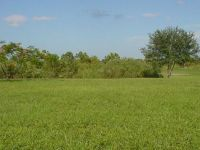 Strainii ne-au luat 6% din tara. 800.000 ha de teren agricol, administrate de cetateni din afara granitelor