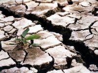 Romania, tara cea mai afectata de seceta din Europa. 600.000 de fermieri primesc ajutoare de la Guvern
