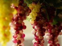 Via si vinul au atras toate fondurile europene. Reportaj din crama guvernatorului BNR, Mugur Isarescu