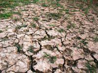 Agricultura a tras in jos economia romaneasca in trimestrul III