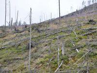 Dezastrul din muntii Fagaras: padurile au fost puse la pamant. Prejudiciul, estimat la 1.800.000 de lei