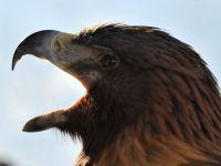 Vultur capturat in Sudan. Spiona pentru Israel