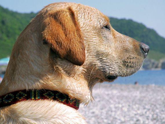 Rasfatul suprem pentru animalele de companie. Brazilia inventeaza motelurile dragostei