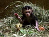 Iranul a trimis o maimuta in Spatiu. SUA: S-a incalcat rezolutia ONU