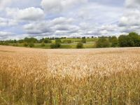 Erste: Agricultura va compensa in Romania un eventual declin al exporturilor catre Italia