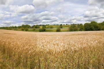 Efectul lipsei de specialisti in agricultura: un tractorist este platit si cu 1000 de euro