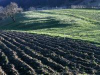 Subventiile, solutia vazuta de fermieri pentru profit. Acum sunt obligati sa restituie ajutoarele
