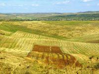 """""""Baietii destepti"""" din agricultura au primit 220.000 hectare de la agentia statului pe 49 de ani. Cum a devenit scump low-costul si cine sunt romanii din boardul corporatiilor internationale"""
