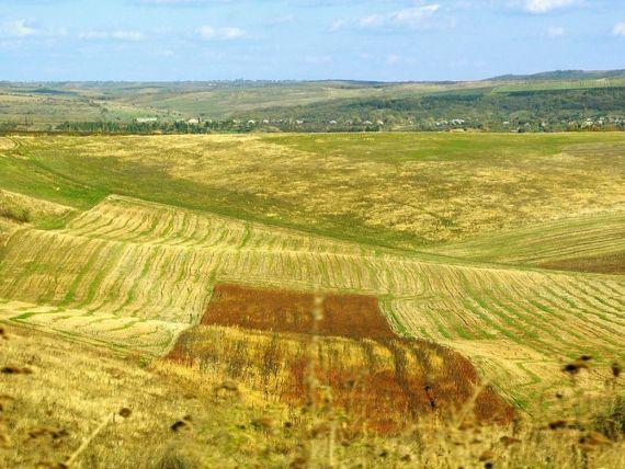 Baietii destepti  din agricultura au primit 220.000 hectare de la agentia statului pe 49 de ani. Cum a devenit scump low-costul si cine sunt romanii din boardul corporatiilor internationale