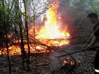 Incendiu puternic intr-o zona impadurita din Bacau. 10 hectare de vegetatie au fost afectate