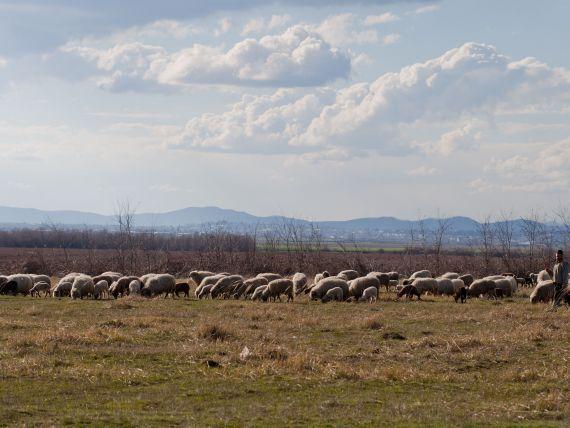 Fermierii vor putea accesa credite de maximum 75.000 de euro