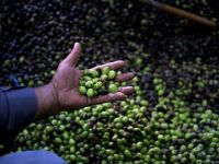 Cum va fi servit uleiul de masline din 2014. Obiectul care va deveni istorie in urma noii directive UE