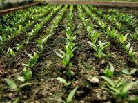 Agricultura eco, o afacere de care nu stim sa profitam. Importam la preturi uriase legume bio, desi avem pamant pentru asa culturi
