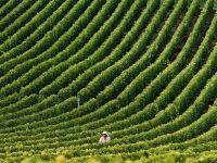 Agricultura ar putea deveni motorul economiei romanesti. Fermierii, desi ajutati de UE, sunt impiedicati de birocratie