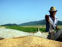 ONU: Recoltele record din acest an vor duce la scaderea preturilor cerealelor