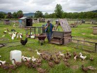 """Constantin: """"Din 2014, statul va acorda ajutor nerambursabil de 15.000 euro pentru dezvoltarea fermelor"""""""
