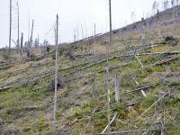 Romania ramane fara paduri. La macel participa si angajati ai ocoalelor silvice, nu doar hotii. 146.000 metri cubi de lemn, defrisati ilegal in 2012. Prejudiciul: 5,7 mil euro. VIDEO