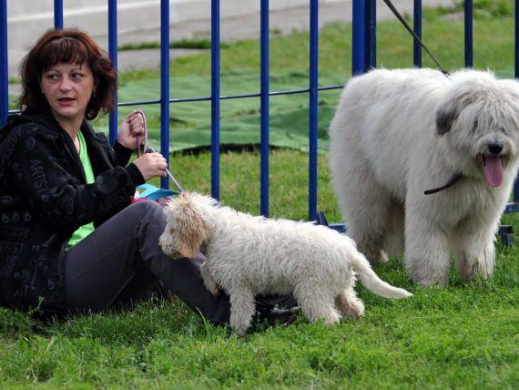 Bucurestenii care nu-si declara cainii vor fi amendati cu 3.000 de lei