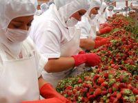 Ponta, in Spania: Nu mai sunt asa multi muncitori romani care vor sa lucreze in strainatate