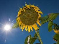 Temperaturile ridicate au atins un nivel record in Austria