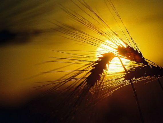 Consiliul Concurentei investigheza 10 companii pentru intelegere la fixarea preturilor cerealelor. Amenzile pot ajunge la 10% din cifra de afaceri