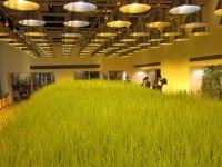 Gradina de legume din birou. Cladirea verde, la propriu, care asigura mancarea angajatilor care lucreaza in ea. GALERIE FOTO