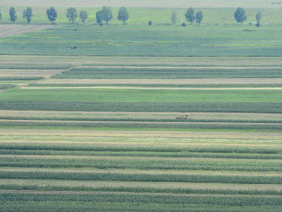 Bloomberg: Investitorii straini in agricultura, atrasi de preturile mici. Un hectar de teren agricol in Romania costa in medie 6.461 dolari, fata de 25.575 dolari in Marea Britanie