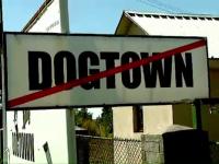 Afacerea Dog Town. Ce legatura exista intre fondatorii celui mai mare adapost de caini si primarul Sorin Oprescu
