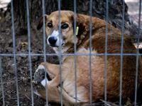 Oprescu: Referendumul privind eutanasierea cainilor fara stapan nu va mai avea loc