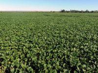"China ""isi cumpara"" o tara langa Romania. Beijingul investeste 2,6 mld. dolari in 3 milioane hectare de teren agricol in Ucraina"