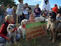 Presedintele Basescu a promulgat Legea privind cainii fara stapan