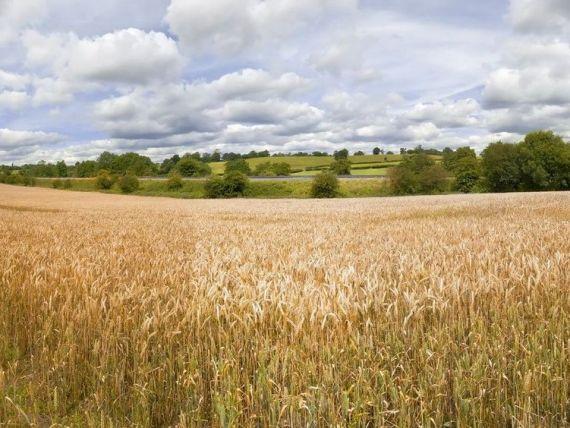 Ministrul Agriculturii:  Fermierii care au intre 5 si 30 de hectare de teren vor primi 175 euro/hectar